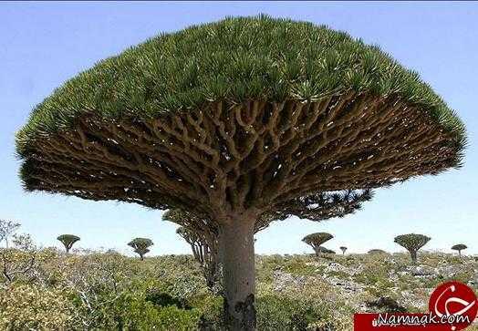 درختی-که-خون-گریه-میکند (1)
