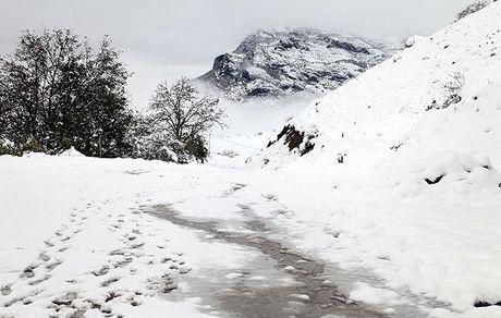 واکنش توئیتری تند به مدیریت بحران و برف در شهرهای شمالی + تصاویر