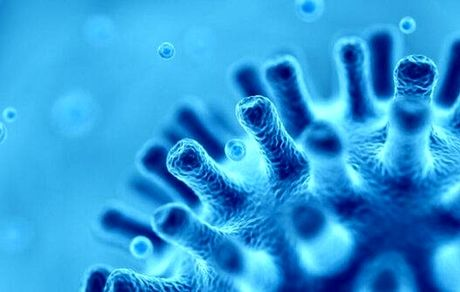 ۳۰۰ ویروس عظیم کشف شد!