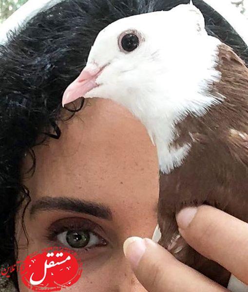 کبوتر زیبای الناز شاکردوست + عکس