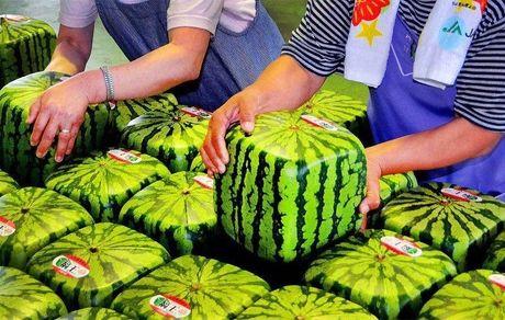 این افراد به هیچ وجه هندوانه نخورند!
