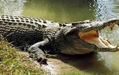 تمساح دریاچه چیتگر پیدا شد + عکس