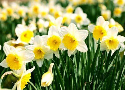 معرفی گل های سمی, آسیب گل های سمی