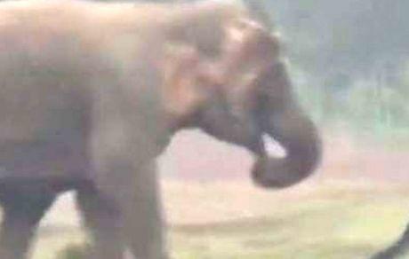 سلفی با فیل حادثه آفرید!
