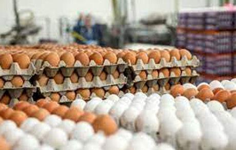 روز جهانی یک غذای خوشمزه/ خوردن ۵ تخم مرغ در هفته اشکالی ندارد