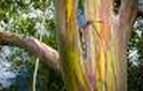 یک زن بریتانیایی با درخت ازدواج کرد