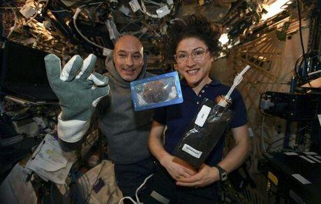 کیکی که در فضا پخته شده است!+عکس