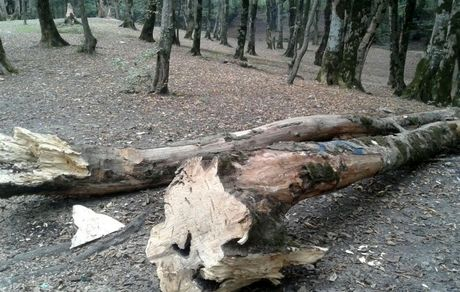 ۱۰ دلیل برای محافظت از درختان