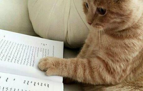 گربه کتاب خوان بهنوش طباطبایی + عکس