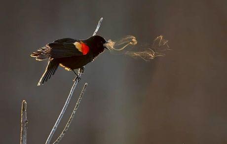 وقتی که ملودی پرنده قابل دیدن میشود!+عکس