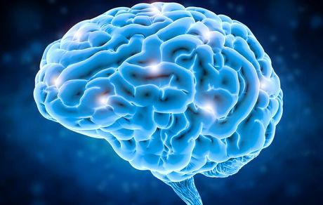 نقشهبرداری از بخش تصمیمگیری در مغز