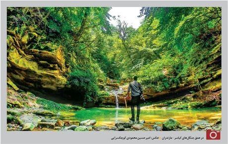 تصویری خارق العاده از جنگل کیاسر+ عکس