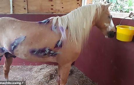 تصادف وحشتناک یک اسب با خودرو