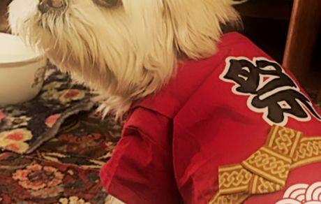 سگ ژاپنی بهناز جعفری + عکس