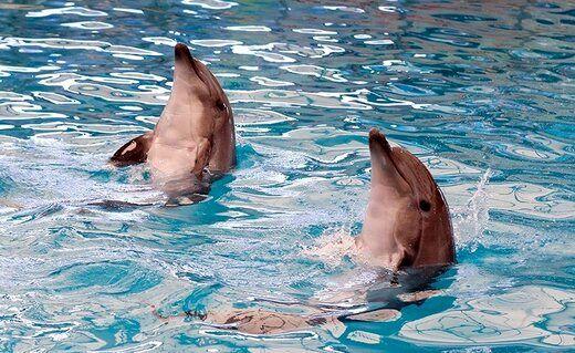 معمای مرگ دلفینها در برج میلاد