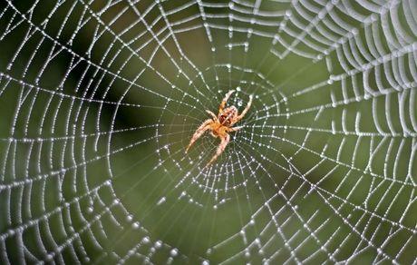 حقایقی جالب در مورد عنکبوت ها