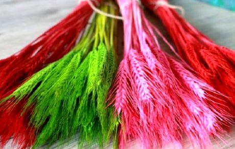 تولید گندم رنگی توسط چینی ها!
