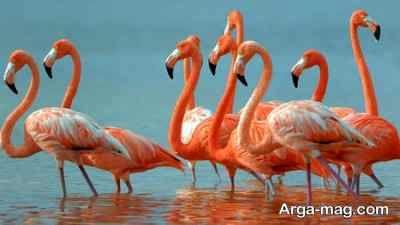 آشنایی با پرنده فلامینگو